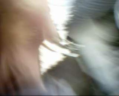 Landgericht Landau in der Pfalz Marienring 13 76829 Landau, Landgericht Landau Pfalz Marienring 13 76829 Landau, Landgericht Landau Marienring 13 76829 Landau, Landgericht Landau Marienring 76829 Landau, Landgericht Landau Marienring Landau, Landgericht Landau, Landgericht Landau in der Pfalz, Landgericht Marienring 13