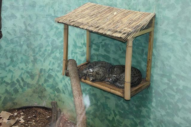 Zoo Snooze 2015 - IMG_7219.JPG
