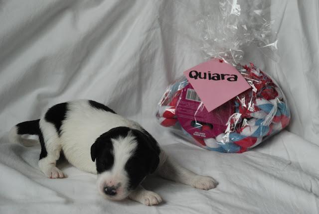 Quiara