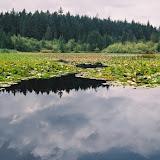 Scenery - British Columbia - Beaver%2BLake.jpg