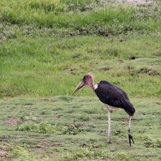 Botswana Chobe