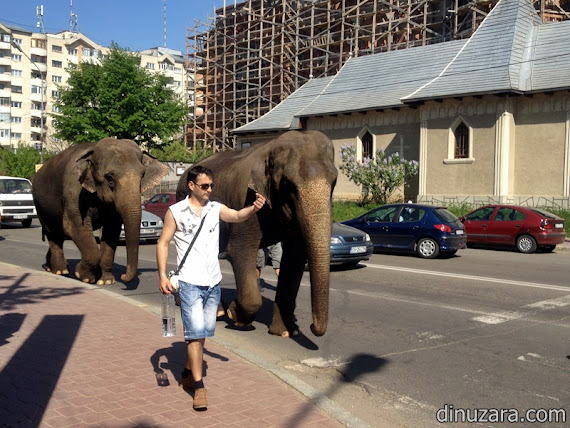 Elefanţi în Suceava