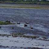 04-06-12 Myaka River State Park - IMGP4459.JPG
