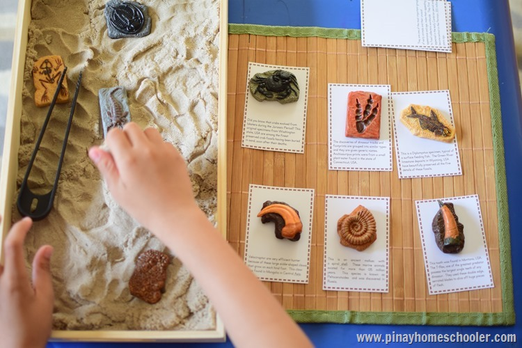 Investigating the Past Life with Safari Toob Fossils