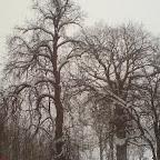 Зимний Вантит 117.jpg