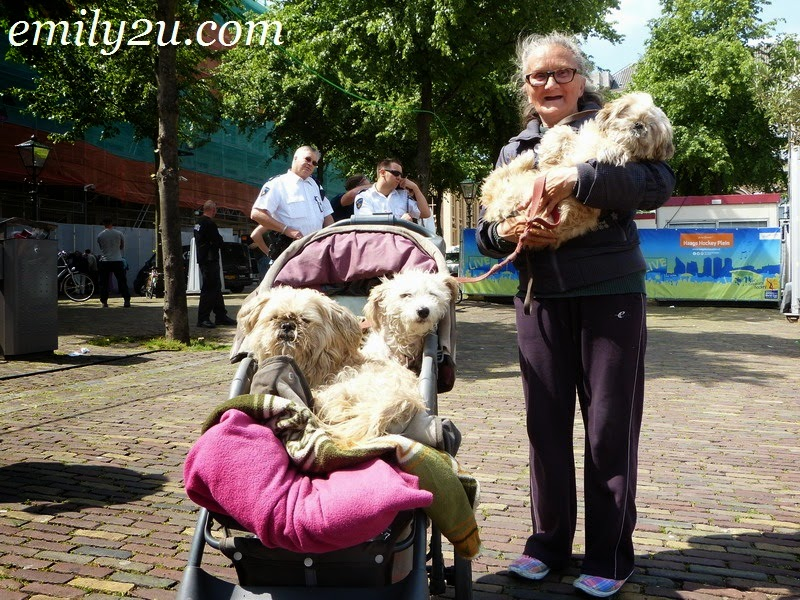 Dogs in Holland