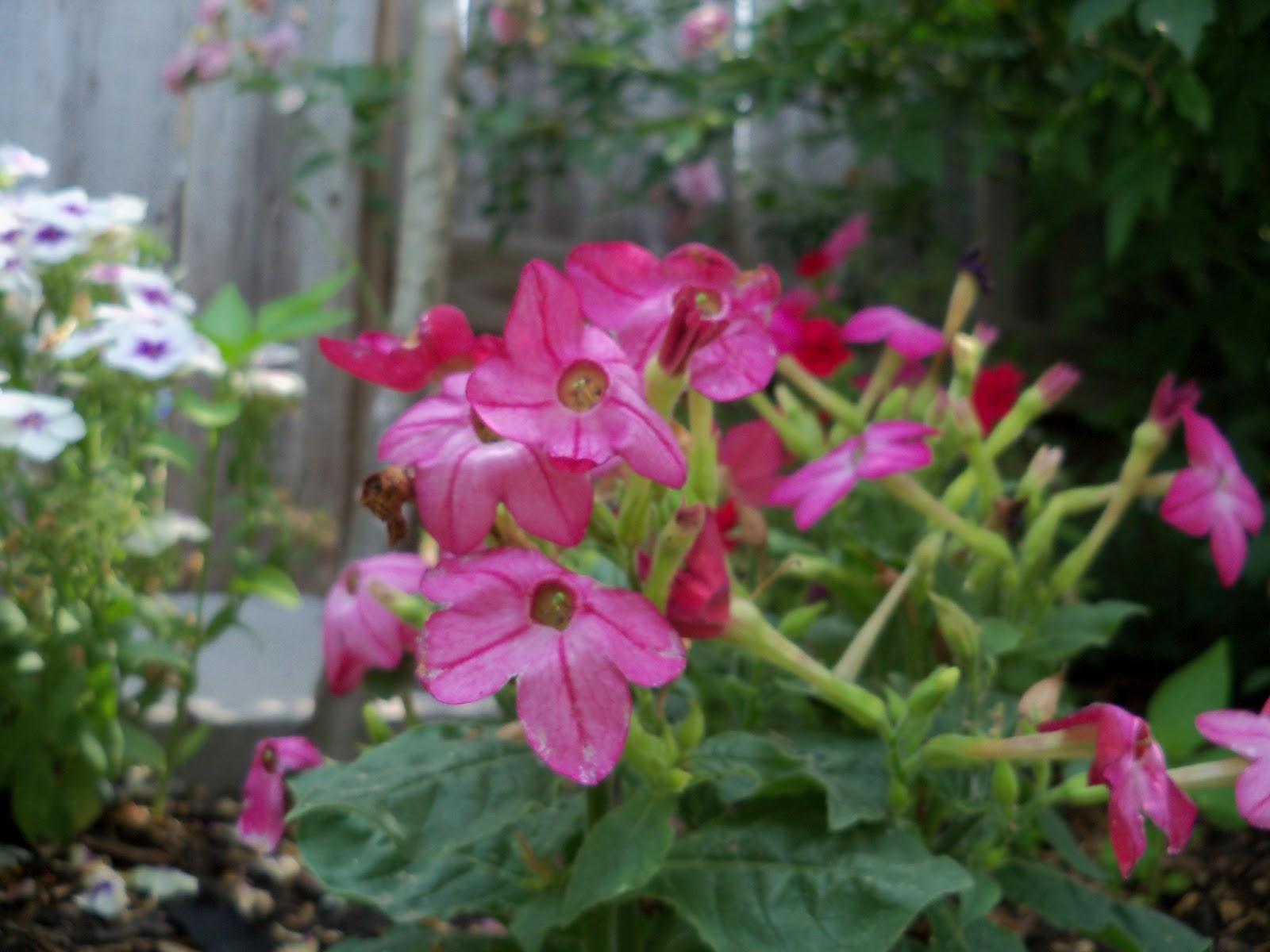 Gardening 2011 - 100_8605.JPG