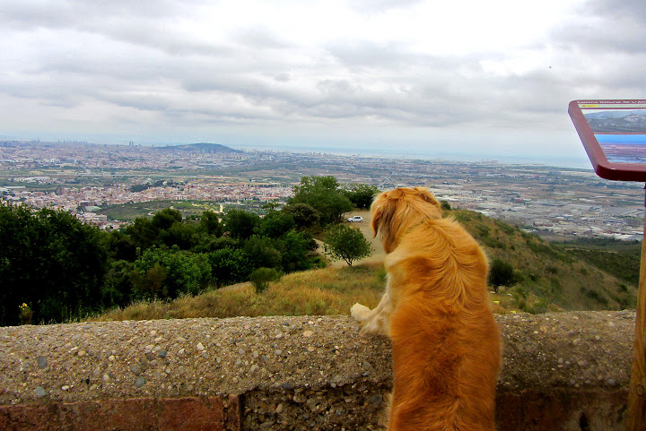 sant ramón con perro