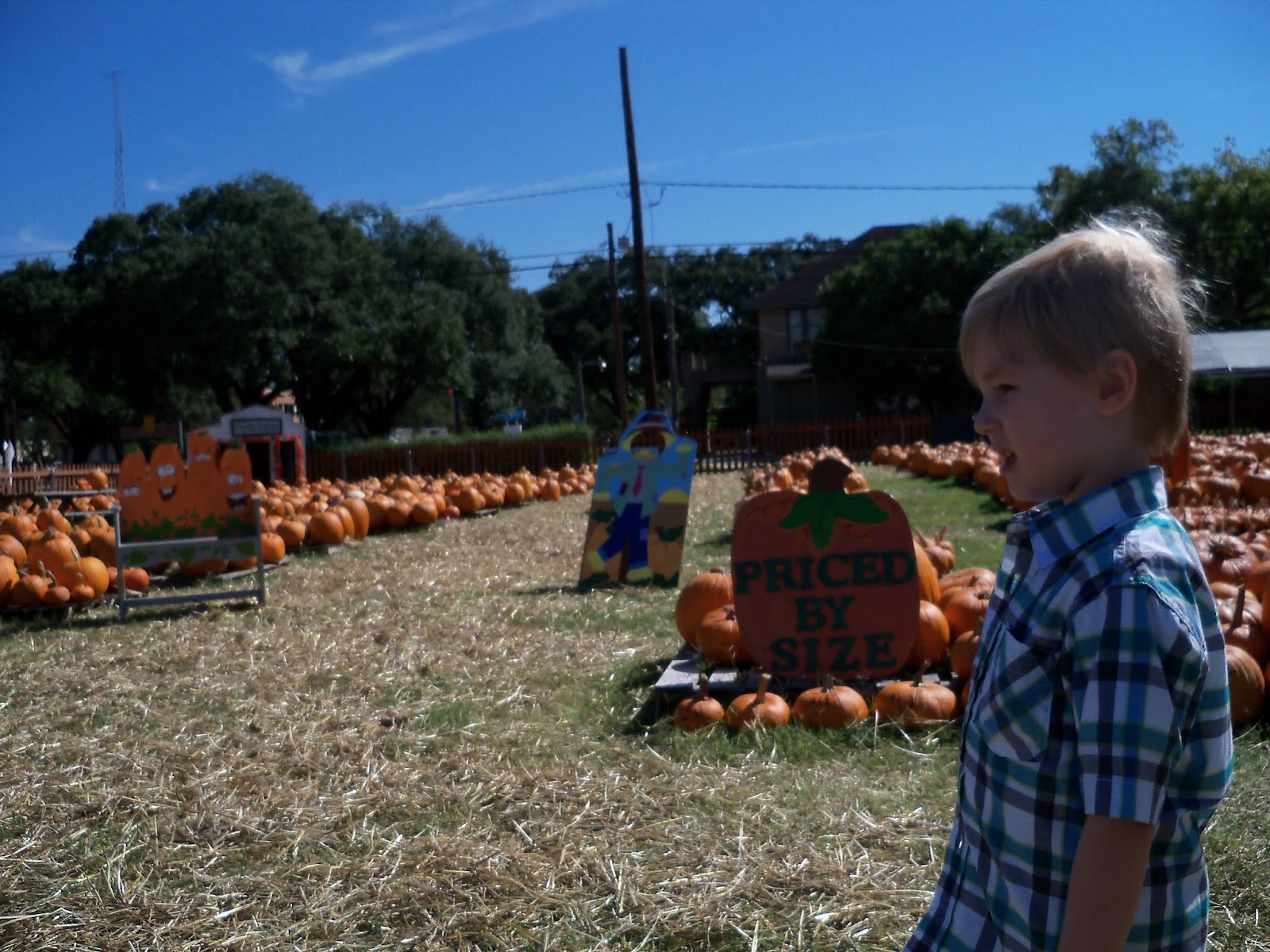 Pumpkin Patch 2015 - 100_0383.JPG