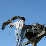 OspreyBanding