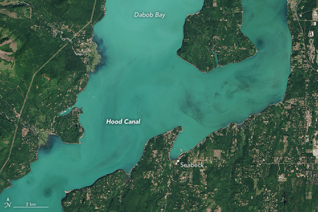 On 27 July 2016, the Operational Land Imager (OLI) on the Landsat 8 satellite acquired a natural-color image of a phytoplankton bloom in Hood Canal — a fjord in Washington's Puget Sound. Photo: Jesse Allen