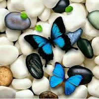 Hassan M