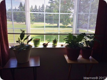 Plants 08022017