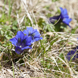 Rosengarten Singletrailtour 14.05.17-9930.jpg