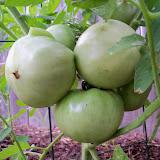 Gardening 2011 - 100_8829.JPG