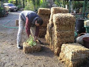 Construction de modules de murs végétaux avec plantes photo prise en 2004 à la pépinière Grangier