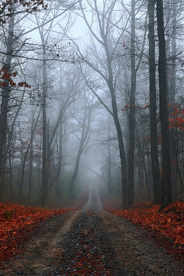 Foggy Fall Road Pictures Wallpapers For iPhone4
