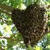 URGENTE! Enxame de abelhas deixa 20 feridos na Chapada do Araripe