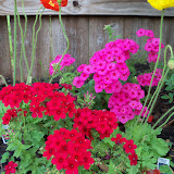 Gardening 2011 - 100_7165.JPG