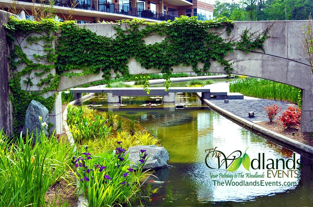 Millennium Mew Koi Pond The Woodlands Waterway