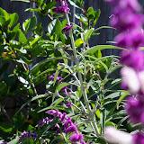 Gardening 2013 - 115_6214.JPG