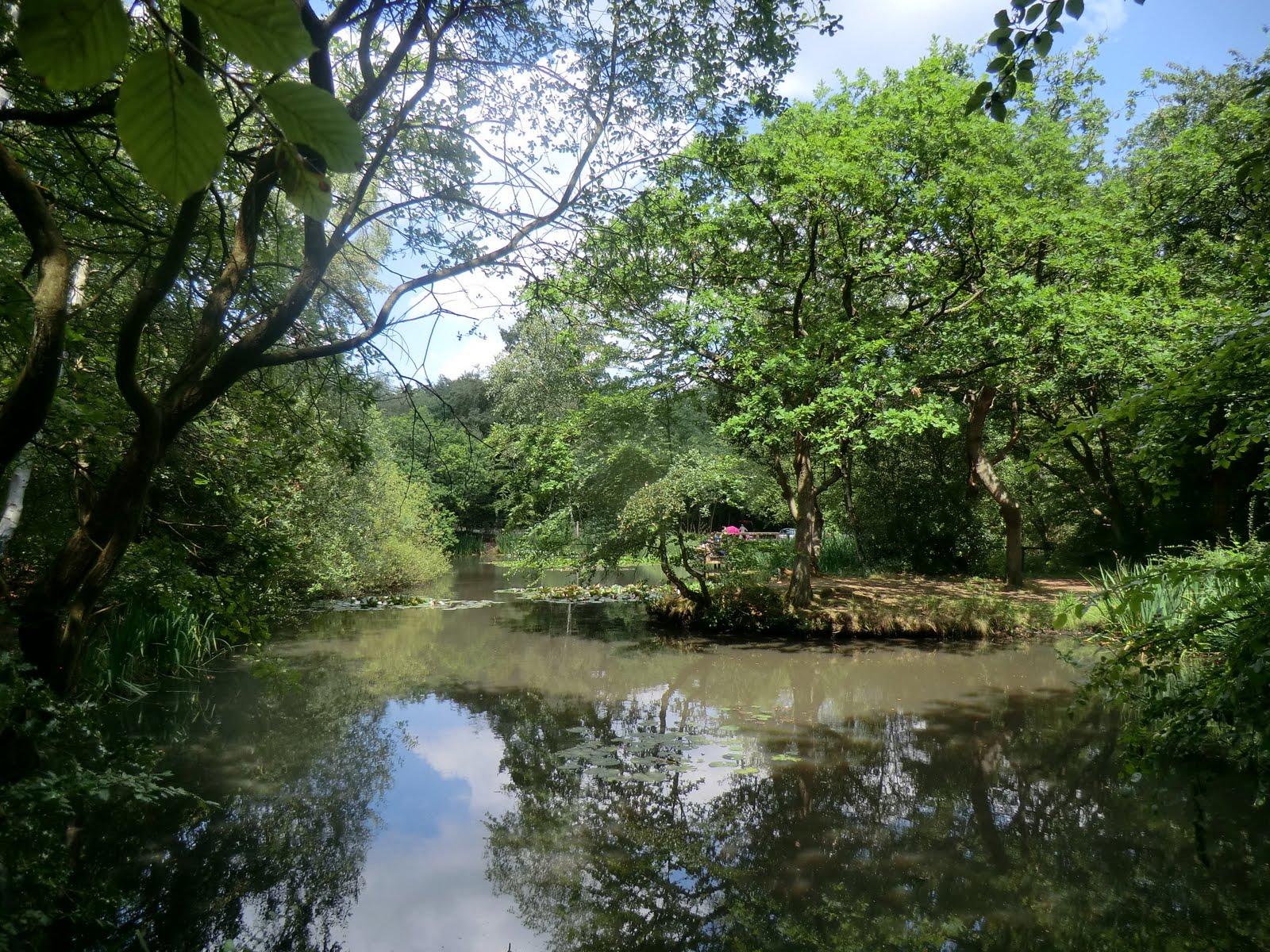 CIMG3211 Pond, Epping Forest