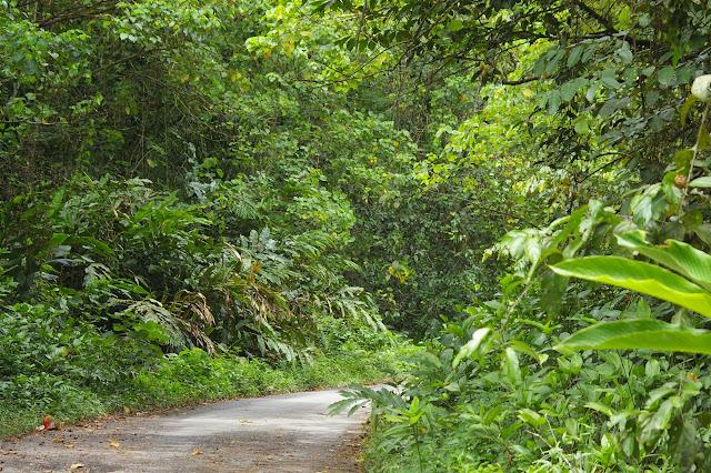 Lieu de passage de Papilio nephelus, etc. Sukau, Sungai Kinabatangan (Sabah, Malaisie, Bornéo), 5 août 2011. Photo : J.-M. Gayman