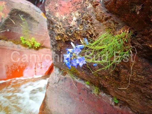 La faune du canyon du Raton