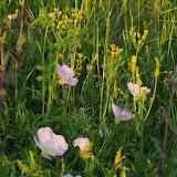 2013 Spring Flora & Fauna - IMGP6342.JPG