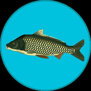 True Fishing_apkmania