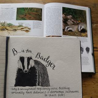 Badger :: www.AliceDrawsTheLine.co.uk