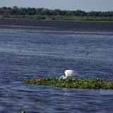 04-06-12 Myaka River State Park - IMGP4462.JPG