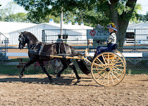 2015-08-22_Baroque_Horse_Show_10244.jpg