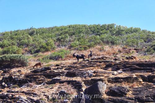 Keppel Island locals