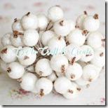 llc white pomegranate