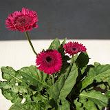 Gardening 2009 - 101_3734.JPG