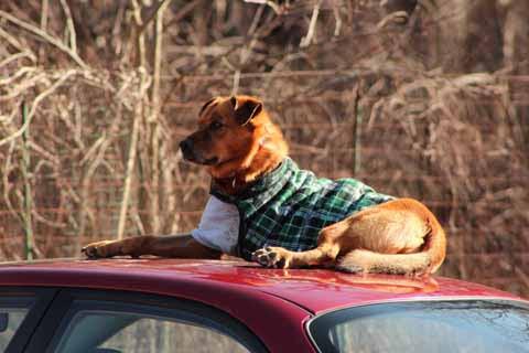 a dog named sara
