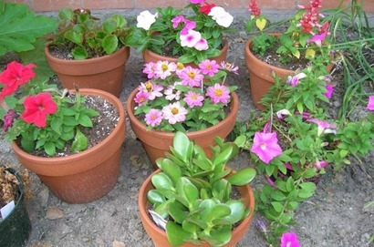 flower_pots.jpg.662x0_q70_crop-scale