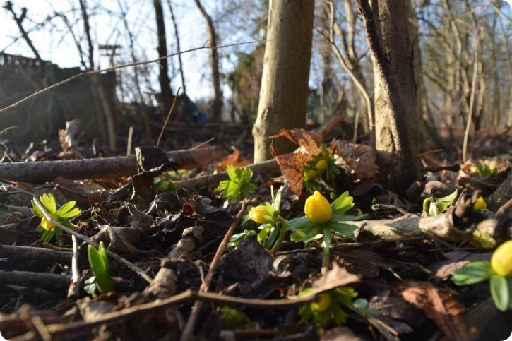 Haven i januar