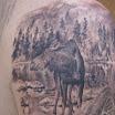 Moose Behind Bear