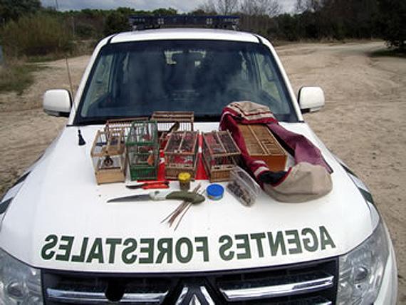 Los Agentes Forestales incautan trampas ilegales para capturar aves fringílidas