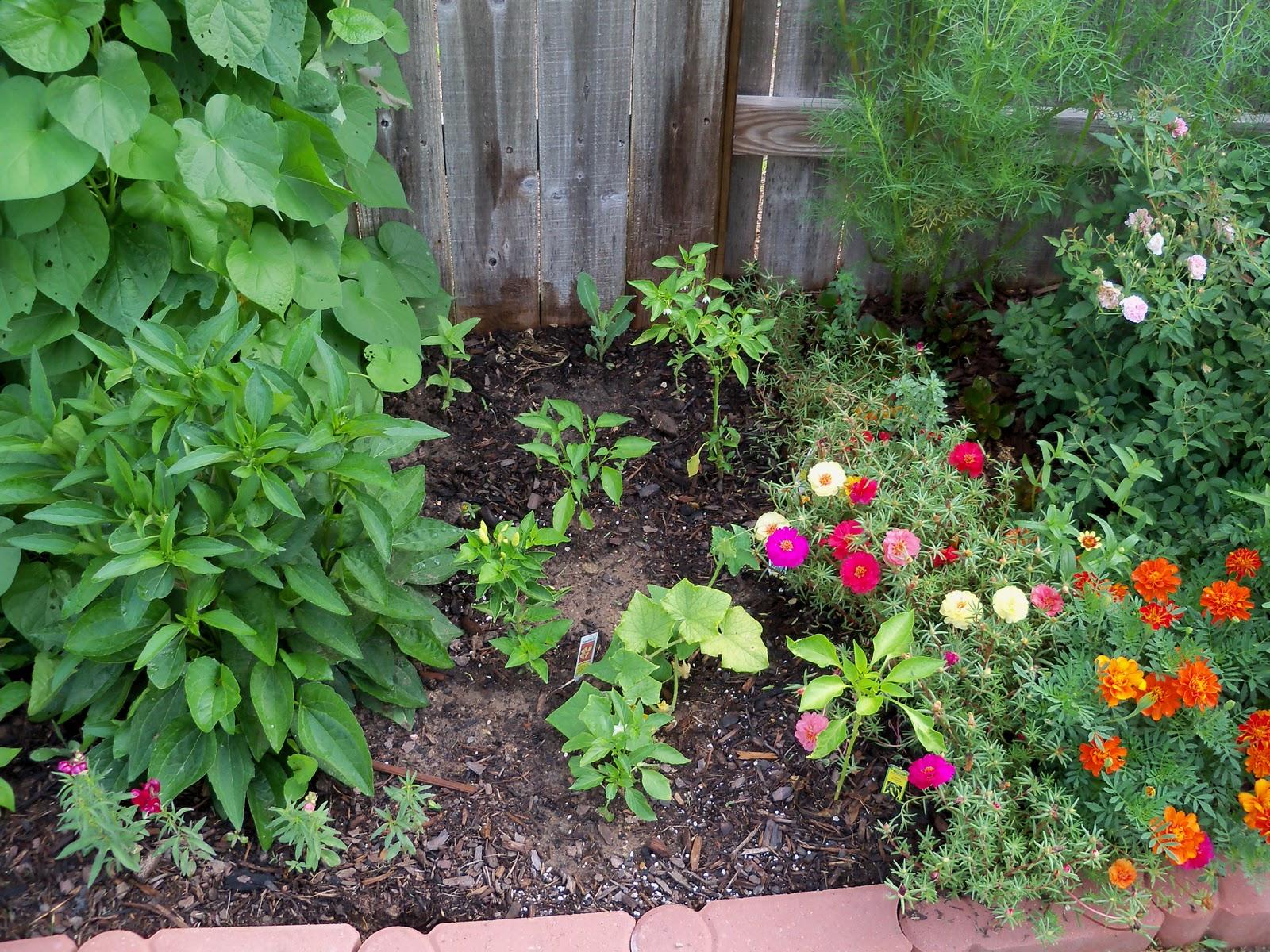 Gardening 2010, Part Two - 101_3312.JPG