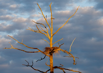 The heron tree