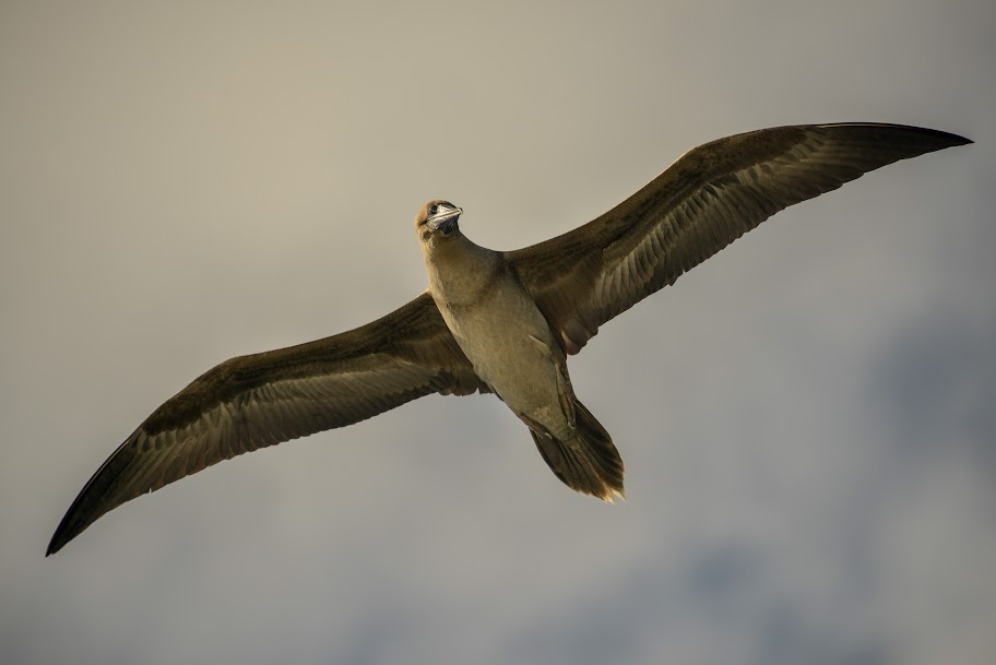 galapagos - Galapagos_FB_2-73.jpg