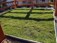 16 A zöldtetős beruházás mintája a telephelyen.jpg