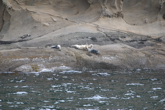 Harbor seals spotted relaxing along the Straight of Georgia / Credit: Bellingham Whatcom County Tourism