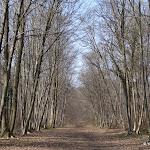Forêt de Coye