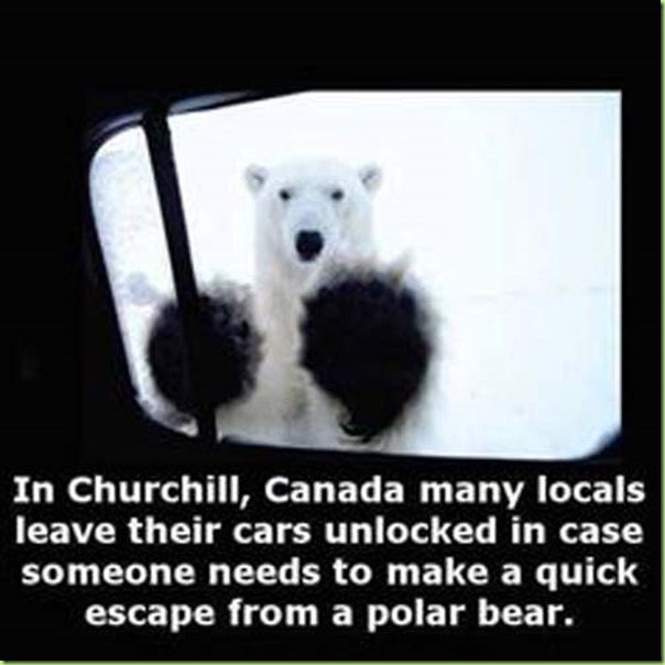 polar bear chuchill cars unlocked