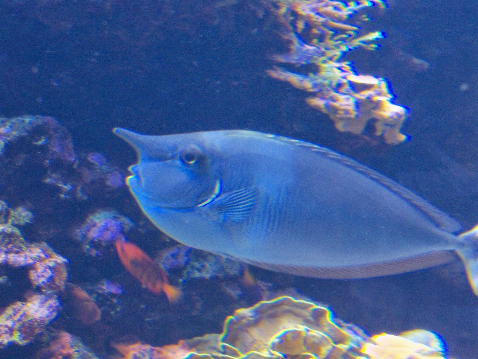 Downtown Aquarium - 116_4000.JPG