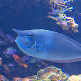 Downtown Aquarium - 116_4000.JPG